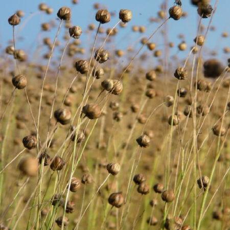 Duurzame stoffen_biologisch linnen